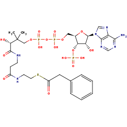 Picture of phenylacetyl-CoA (click for magnification)