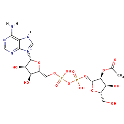 Picture of 2''-O-acetyl-ADP-D-ribose (click for magnification)
