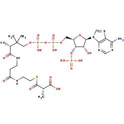 Picture of (S)-methylmalonyl-CoA (click for magnification)