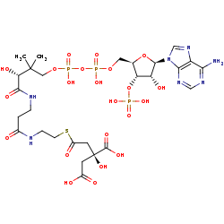 Picture of (3S)-citryl-CoA (click for magnification)