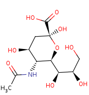 Picture of N-acetylneuraminate (click for magnification)