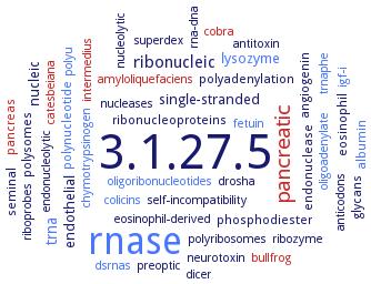 BRENDA - Information on EC 3 1 27 5 - pancreatic