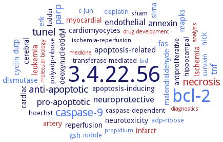 BRENDA - Information on EC 3 4 22 56 - caspase-3