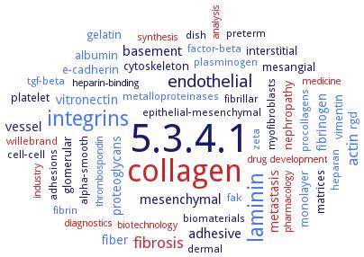 BRENDA - Information on EC 5 3 4 1 - protein disulfide-isomerase